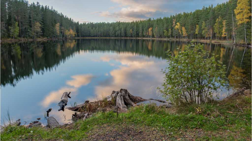 Dusk clouds and a dense forest with pine trees and silver birch in autumn colours are reflected in a calm little forest lake. In the foreground we see the withered remains of an old tree stump.