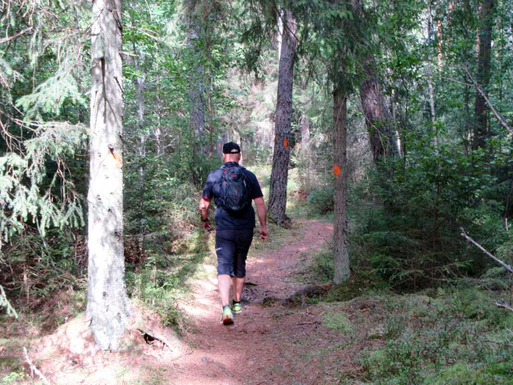 A man is walking on a hiking trail in the forest