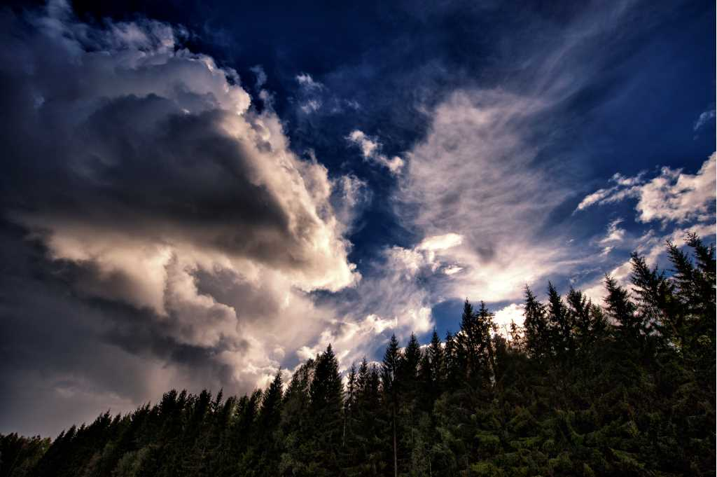 A dramatic sky and some treetops
